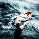 Hechtsprung-Kraft und Dynamik live